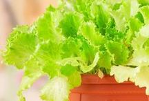 Vegetable & fruit garden ideas in containers and pots