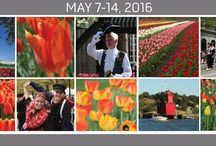 Tulip Time 2016 / May 7-14, 2016!  / by Holland Michigan