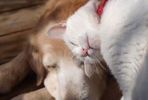 Cats & Dogs / animals