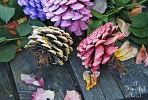 fiori con pine