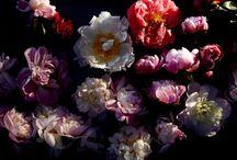 Floral Fanfare / by Lala Lopez