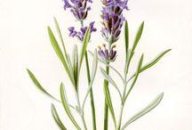 vintage flower images