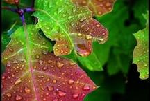 Gardening / by Diane Droegmiller