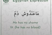 Education arabic egyptian