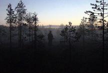 Grouse hunting // Metsäkanalintujen-metsästys