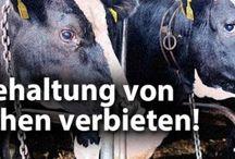 Tierschutz Nachrichten aus dem Tierschutzbüro / Alles rund um Tierschutz