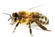 Beeginning