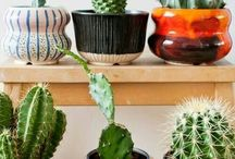 Plantas, cactos e decorações
