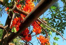 Natureza-lugares / www.lindarteirahavaianas.com.br