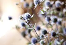 {grow} flowers / by Leslie Jones