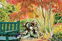 japanese tree's
