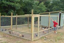 Chicken yard ideas