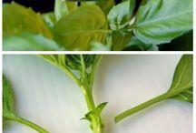 plante tips