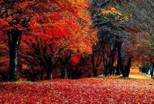 Времена года.Осень.