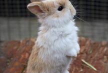 I want one!! LoL