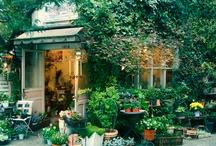 Garden  / by Carol Doctor