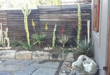 house McGibney / A client wanted a garden but had very little space. The area on the paving gets very hot.  We chose #stoneware #pots in different sizes to plant in.  We planted Cacti and Succulents  and Aloes.