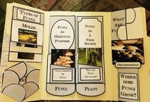 All About Fungi Unit and Activities