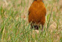 Birds / Small birds