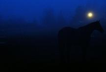 Fog Hog / I would drink fog if I could.