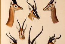 Botánica Entomología y Anatomía