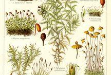 Botanology etc..