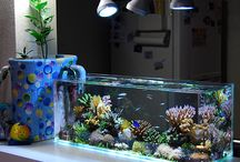 Reef tanks / Saltwater reef tanks that we think look amazing… featuring fish, coral, seastars, and other invertebrates!