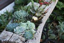 Jardinagem e paisagismo / Estou montando o meu jardim, aqui vão algumas ideias!