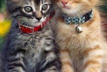 Pisici ♥