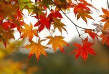 Seasons ~ Autumn