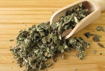 Herbal Medicine / Traditional use and new research on western herbs. How to use, how to find etched