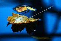 automne / couleurs d 'automne