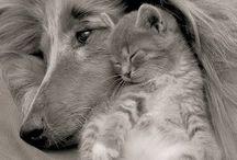 Yavru kedi ve köpek