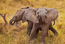 Elephantes!! / by Amy Giofu