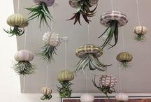 jellyflower