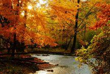 Fall / by Bonnie Kelly