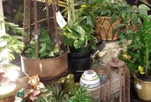 Plants / Interesting plants