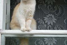 gato e janelas
