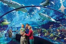 Day Trip Attractions / Join #GoMcCoy on an underwater adventure to Ripley's Aquarium in Toronto, Medieval Times, Metro Toronto Zoo and More!! / by McCoy Tours