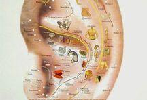 auriculo terapia