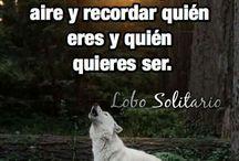 pasion por los lobos