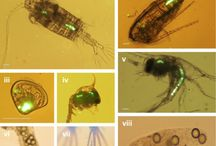 Microplastics Board / A collection of microplastics research, observations and projects.