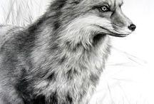 vossen-fox