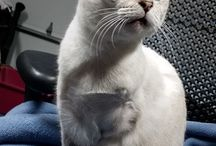 Amazing Cats who Need Homes
