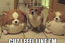 Funny Dog Pics :) / Dog pictures, memes, and more to brighten your day :)