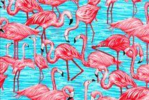 § flamingos