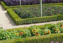 Productive Garden