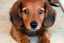 Dogs / Cute gorgeous dogs ❤️