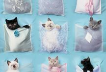 Crazy Cat Ladies / We know you're out there, ladies! Here are some fun things to add to your collection.