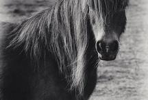 horses, horses, horses / by Jen Nestor